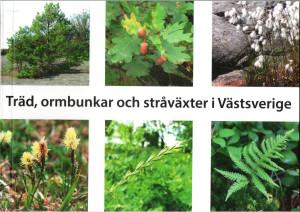 Träd, ormbunkar